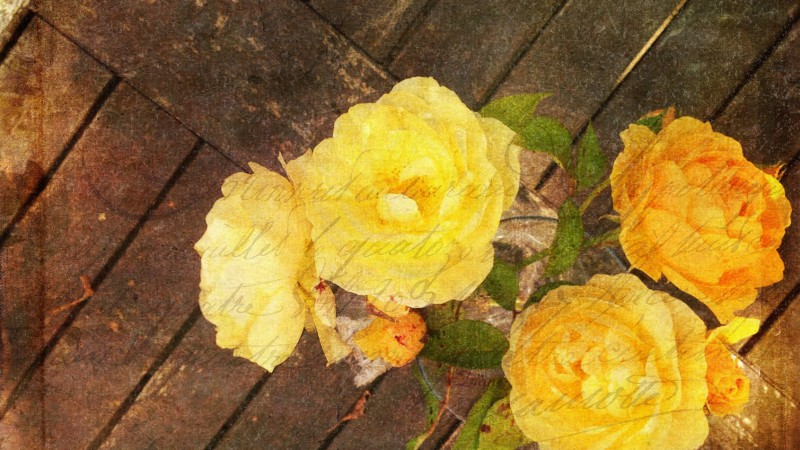 yellow roses mixed media style image