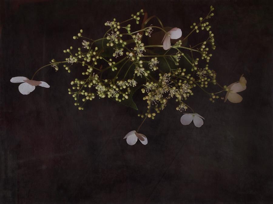 English Garden Florals #2 in Series | Diane Stafford