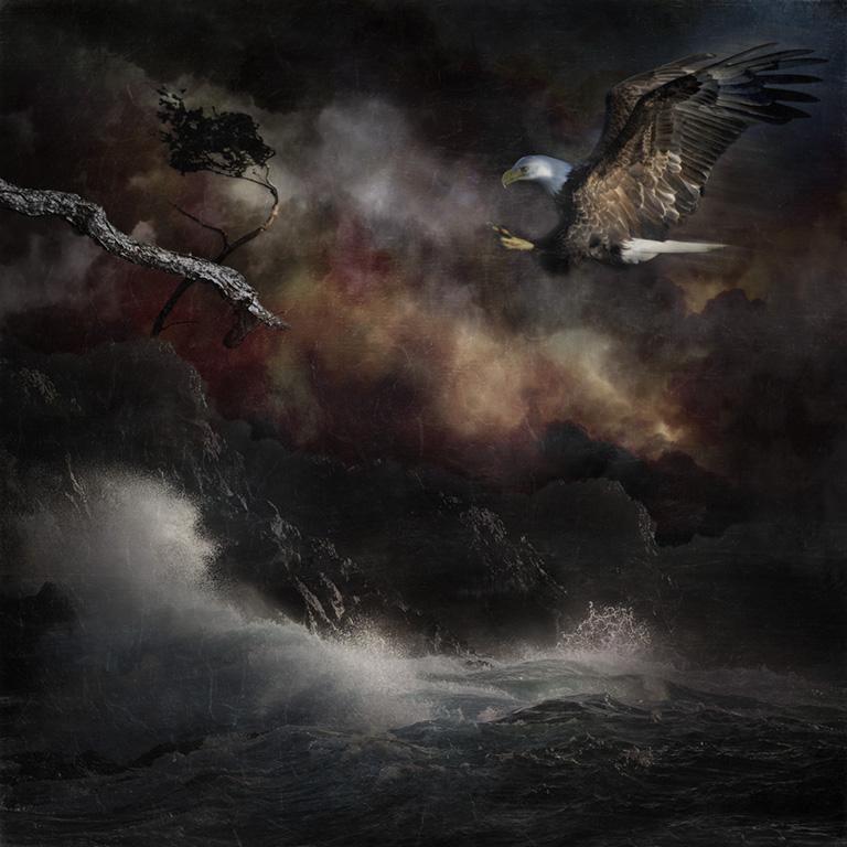 Eagle Landing | Diane Stafford