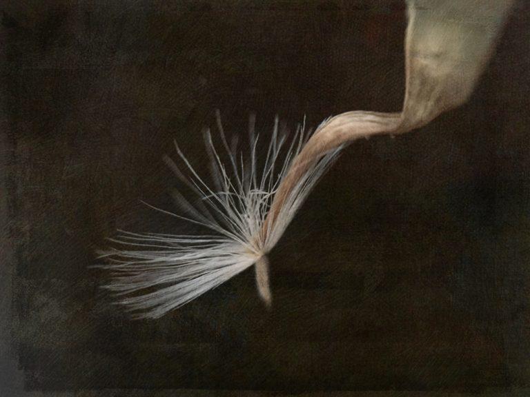 Diane Stafford Art Work Autumn Flight 1